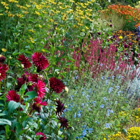 6 Perennials - Pot Luck Mix - Minimum 3 Species